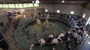 Megastallen: veel en goedkoop: Intensieve veehouderij in Nederland