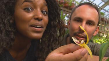 Het Klokhuis: Slimme bloemen
