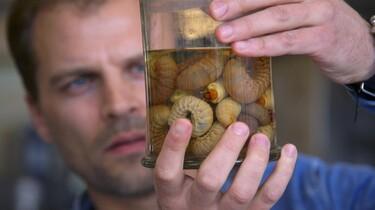 Keuringsdienst van Waarde in de klas: Insecten