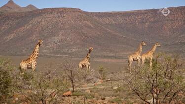 Goede Hoop in de klas: Wilde dieren in Zuid-Afrika