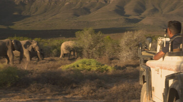 Het Klokhuis: Zuid-Afrika: Wilde dieren