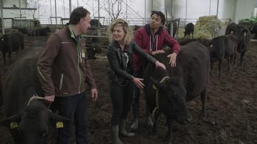 Wat zijn wagyu-koeien?