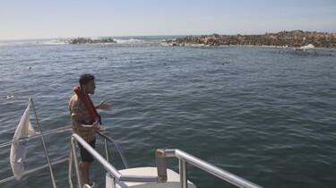 Het Klokhuis: Zuid-Afrika: Zeesafari