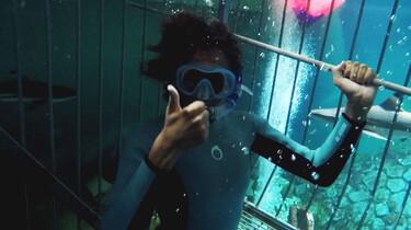 Het Klokhuis: Haaien