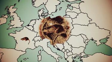 Muskusratten bedreigen onze dijken: Hoe kwam de invasieve exoot in Nederland?