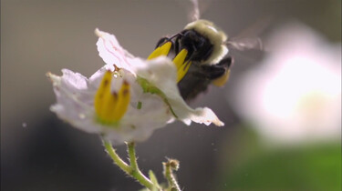 Wat zijn pollen?