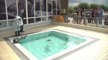 Zeehonden verzorgen in Pieterburen