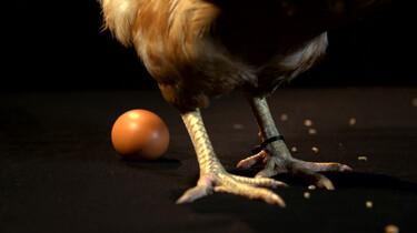 Waar komen eieren vandaan?