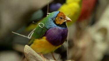 Hoe wordt een vogel opgezet?