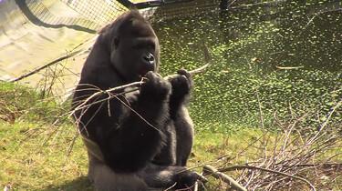 Hoe voorkom je dat dieren in de dierentuin te dik worden?: Een evenwichtig voedingspatroon