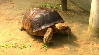 De landschildpad