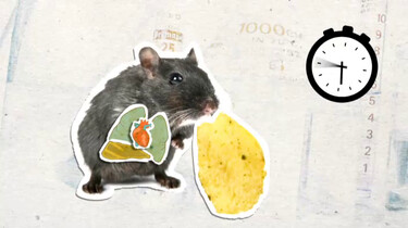 Wat gebeurt er als een muis te veel vet eet?