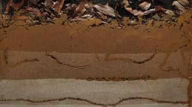 Wat doet de regenworm onder de grond?