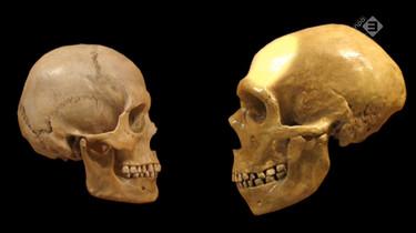 De Kennis van Nu in de klas: De mysterieuze verdwijning van de neanderthaler