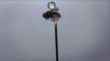 Hoe overleeft een mug een regenbui?