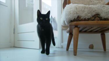 Waarom miauwt de ene kat meer dan de andere?