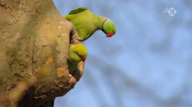 De Kennis van Nu in de klas: Exotische soorten in Nederland