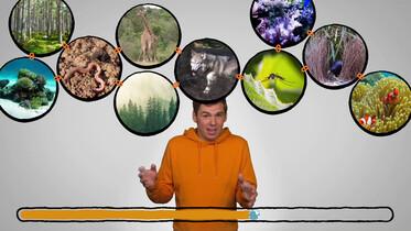 Wat is biodiversiteit?: Verschillende vormen van leven