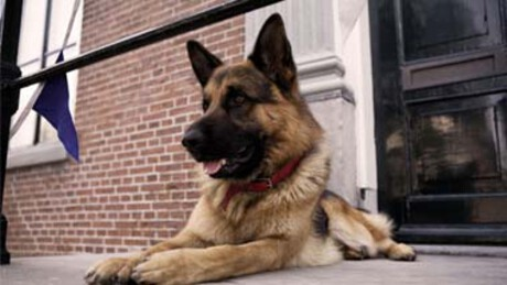 Zappbios | Snuf de hond in oorlogstijd
