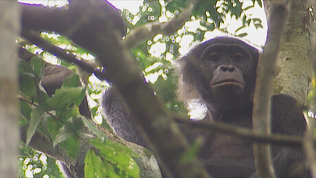 Het Klokhuis   Bonobo