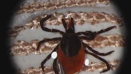 Het Klokhuis | Ziekte van Lyme
