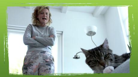 De kat: huisdier of roofdier?
