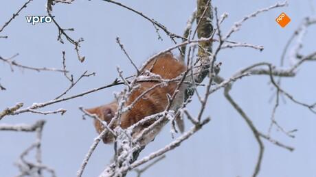 Poesjes | Winter