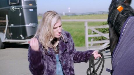 Zappsport | paardrijden