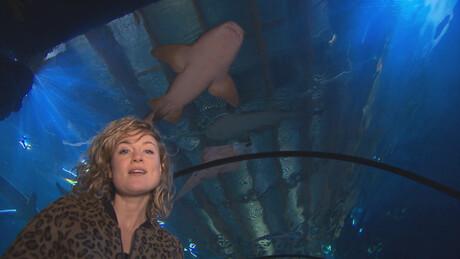 Het Klokhuis | Zeeaquarium verzorger