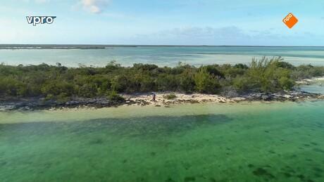 Freeks wilde wereld | Zwemmen met haaien