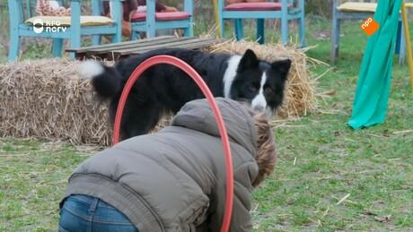 Puppy Patrol | Nora en Danny