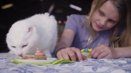 Koken met konijnen | De poes zonder oren
