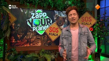 Zapp Your Planet | Zapp Your Planet: SOS Koala