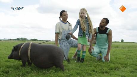Koken met konijnen   Het varken met een superhart