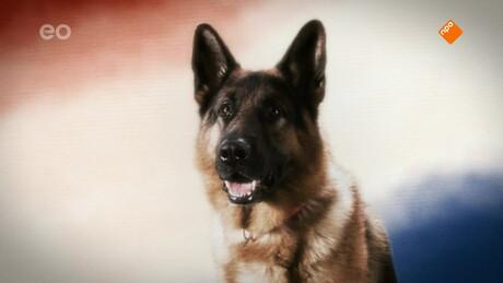Snuf de hond en de IJsvogel: De afrekening