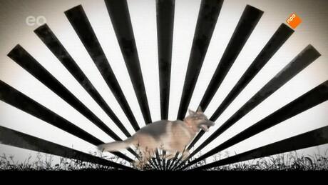 Snuf de hond en de IJsvogel: De ontsnapping