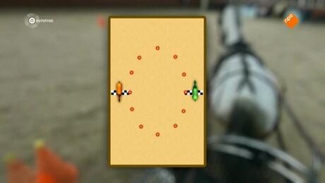 Zappsport | Paarden Tim Lips