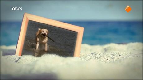 Hond Norman