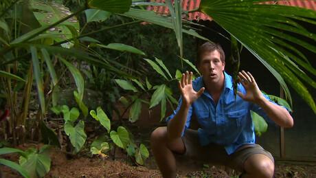 Freek in het wild | Jungle survival en kolibrie