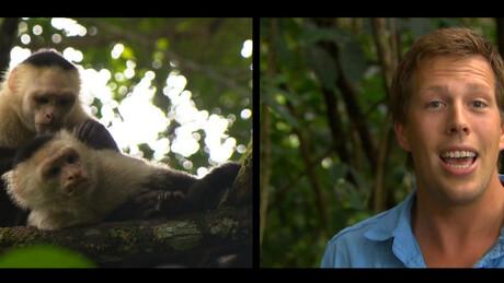 Freek in het wild | Apen en aliens