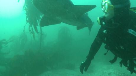Freek in het wild | Blauwe haaien
