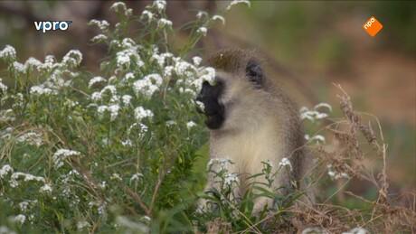 Freeks wilde wereld | Dierenprintjes op de savanne