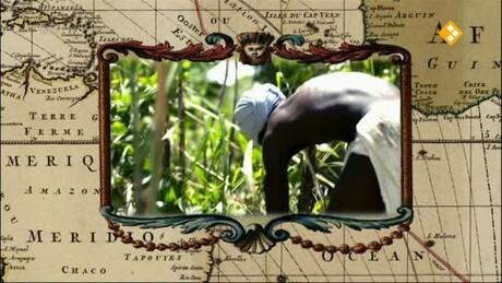 De Slavernij Junior | Suiker