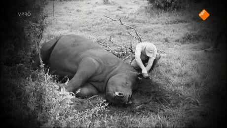 Freek in het wild | Tandi de neushoorn