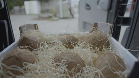 Kosmoo | Papegaaien in nesten
