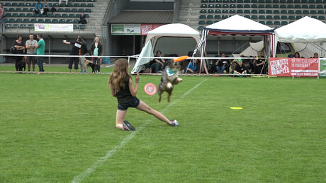 Dogfrisbee-kampioenschap in Duitsland