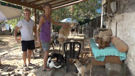 Beestieboys | Gerbiens Griekse hondenopvang