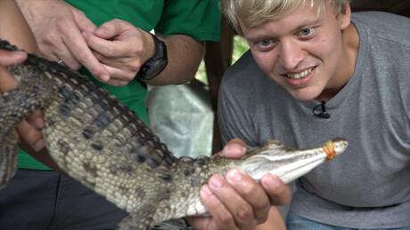 Krokodillen beschermen op de Filipijnen