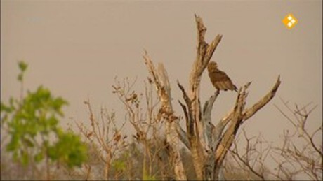 Freek op safari | Busanga