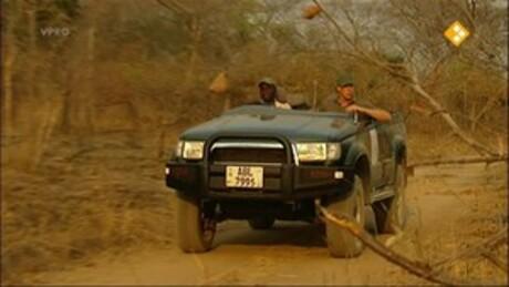 Freek op safari | Leeuwen zoeken